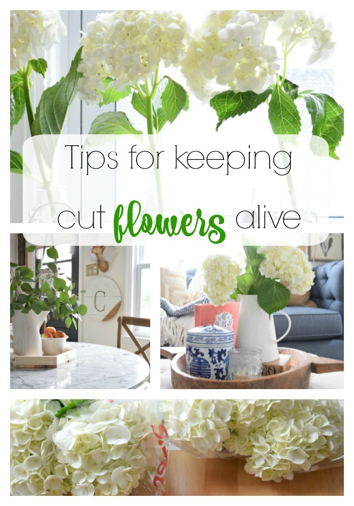 tips for keeping hydrangeas alive nesting with grace. Black Bedroom Furniture Sets. Home Design Ideas