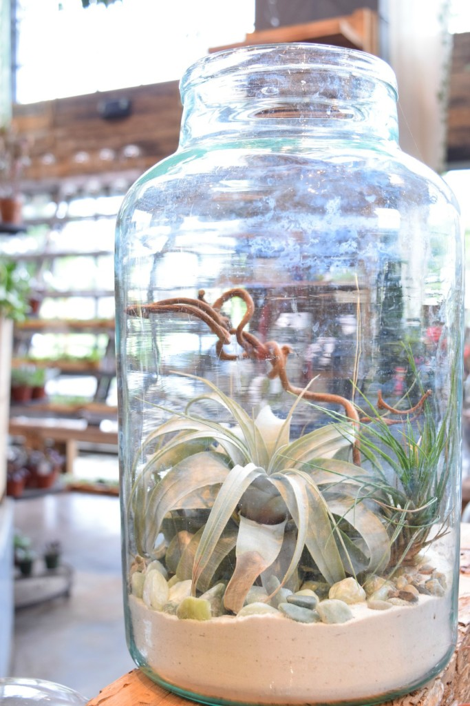 Fall inspiration- succulents, shop terrain, best place for chocolate chip cookies