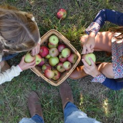 Fall Day Apple Picking with Gilt Clothing