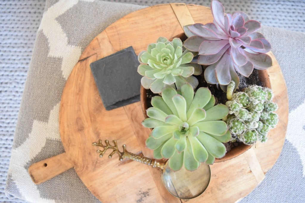 Ideas for succulents the best house plants nesting with grace - Plants for every room in your home extra comfort and health ...