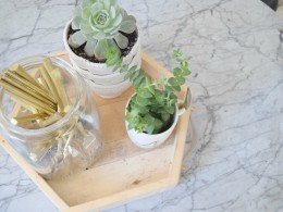 Succulents the best house plants and how to use them in your home