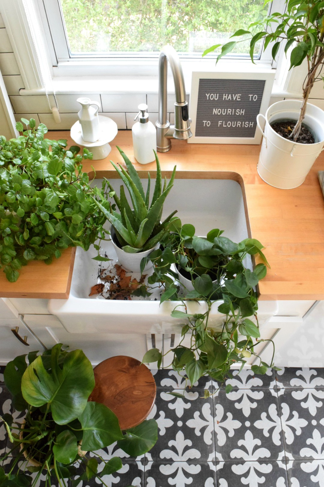 House Plants- My Top House Plants That Can Be Left Alone