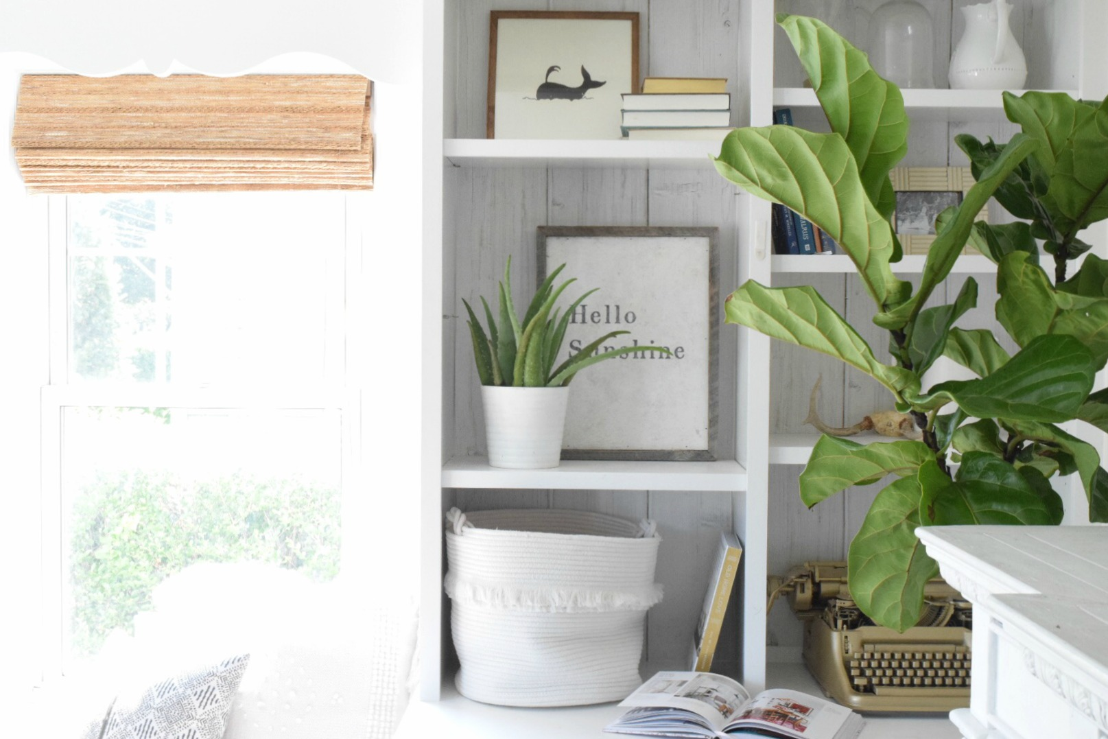 Fiddle leaf fig tree home depot my fiddle leaf fig our for Modern low maintenance plants