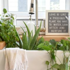 5 House Plants That are Low Maintenance- My Tips on Keeping them Alive