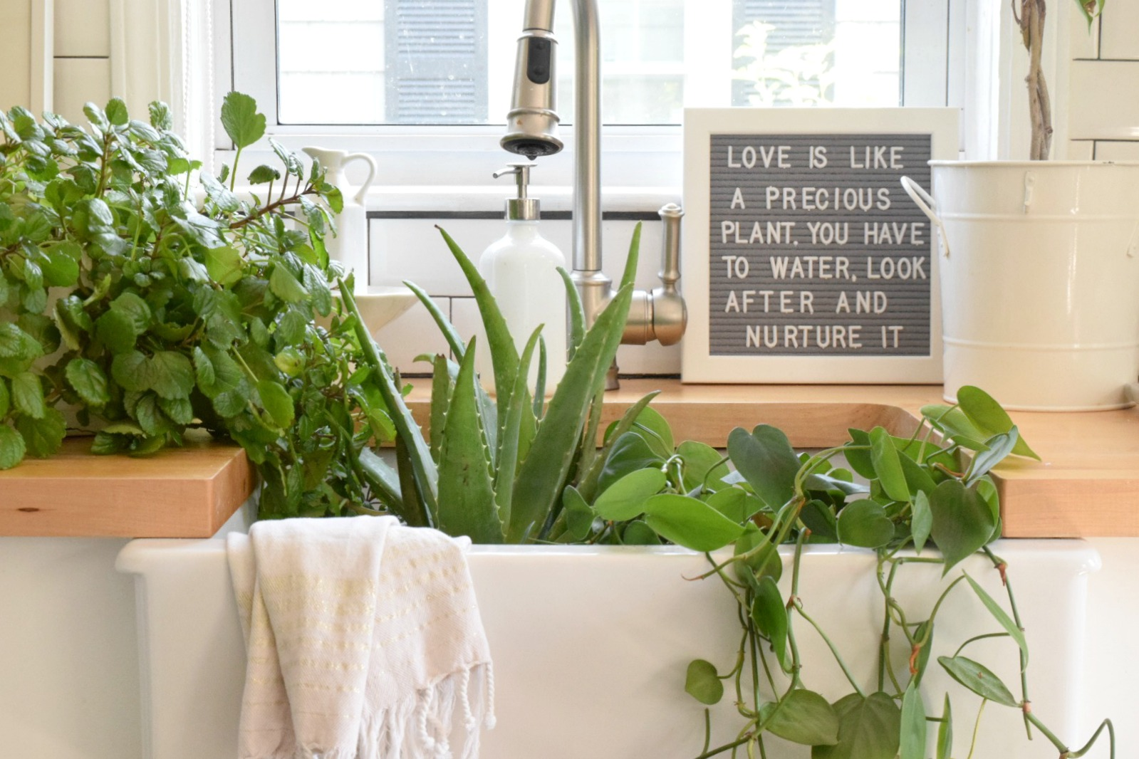 5 house plants that are low maintenance my tips on for Low maintenance indoor plants