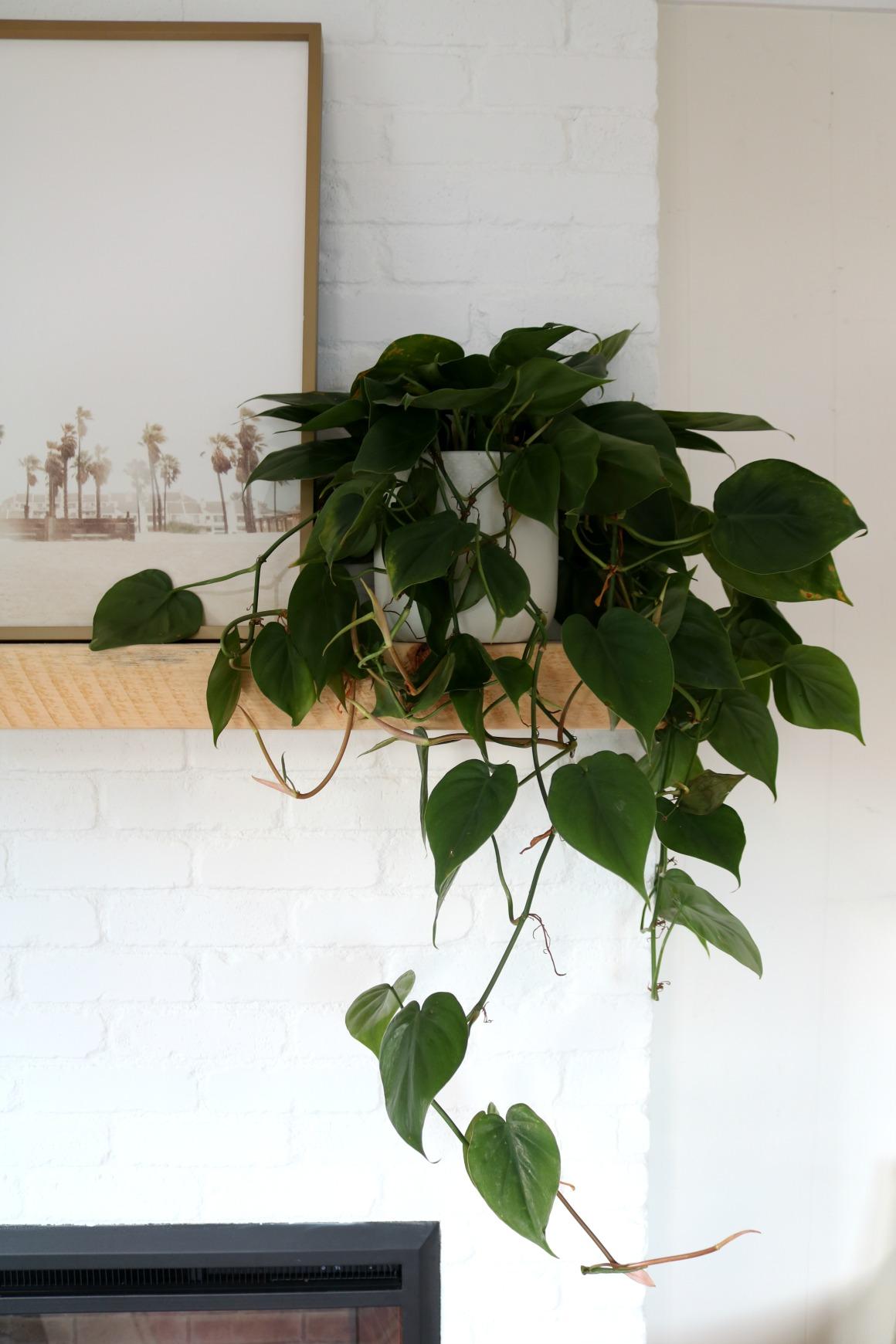 Easiest Houseplants to keep alive- Why I LOVE houseplants