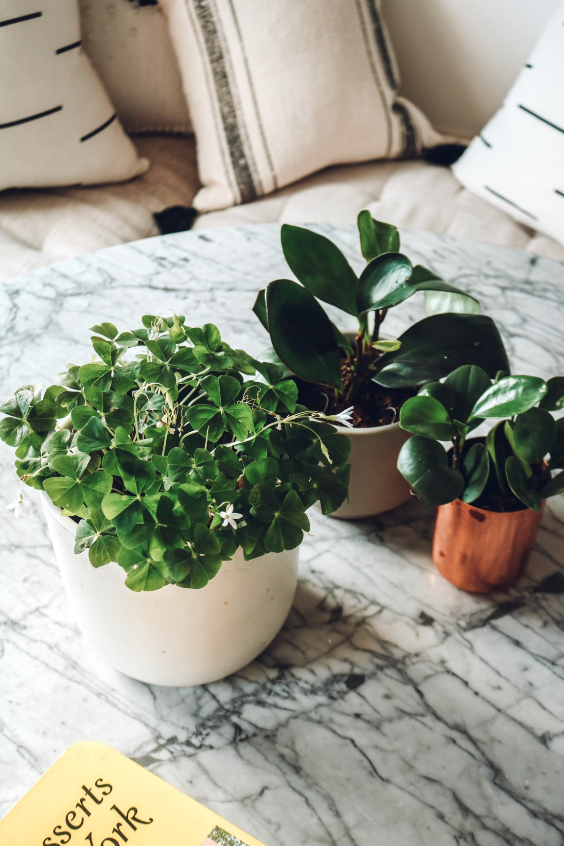 5 Ways to Bring Spring In!
