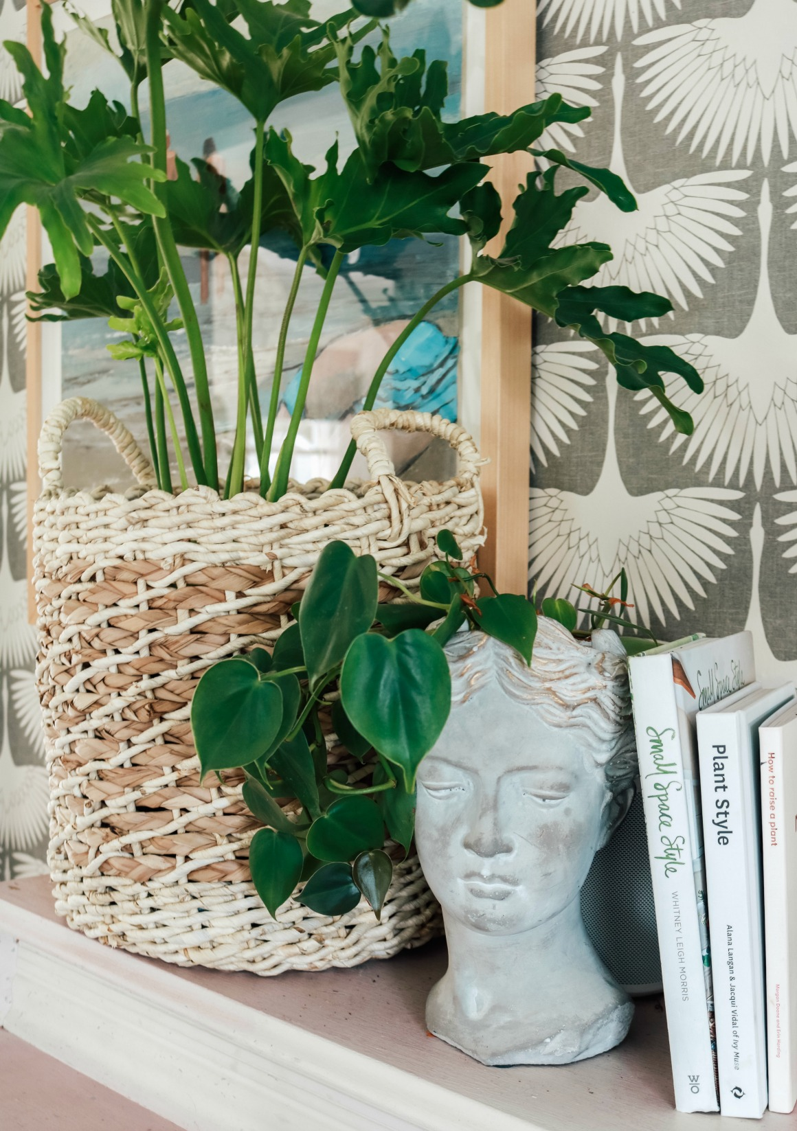 How to use Essential Oils for Houseplants