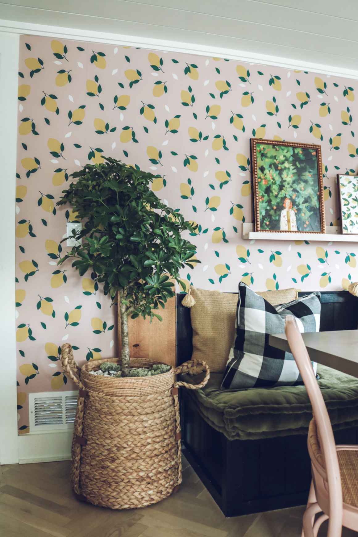 House Plant Tour and Plant Care Tips Easy House plants