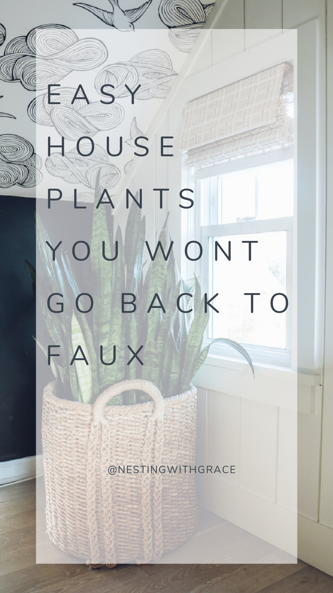 House Plant Tour and Plant Care Tips